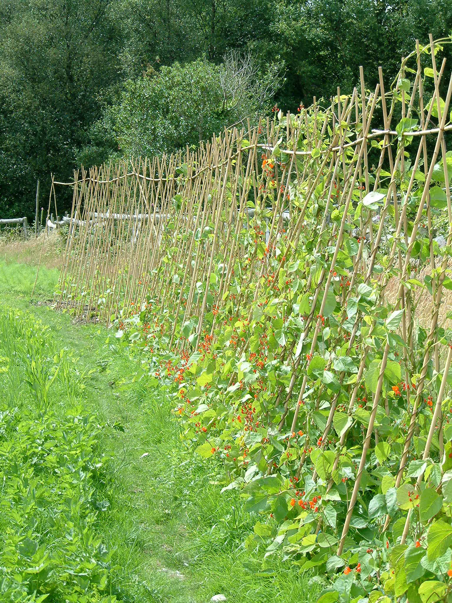 Village_veg_farmpics._20.7.09_054